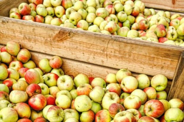 Protest przed zakładem Döhler: Będzie 35 gr za jabłka przemysłowe