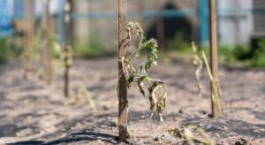 Fale upałów negatywnie wpływają na glebę