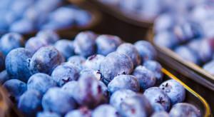 Berry Group: Jesteśmy przygotowani na kryzysy w branży owoców jagodowych