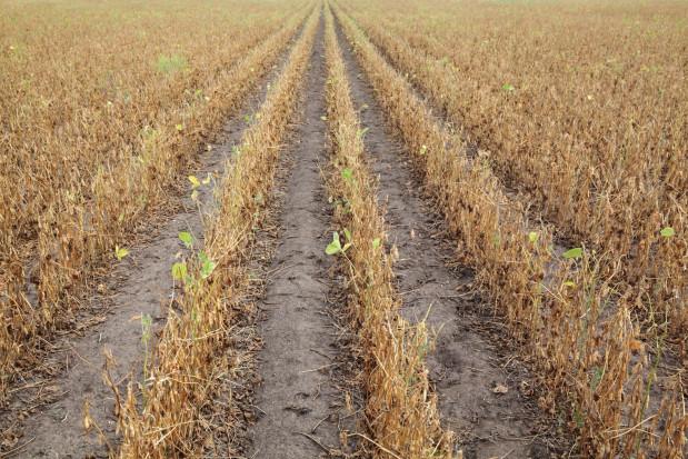 Susza: Zbiory warzyw w UE mogą być nawet o połowę mniejsze