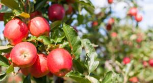 Zalecenia przed nowym sezonem przechowalniczym jabłek