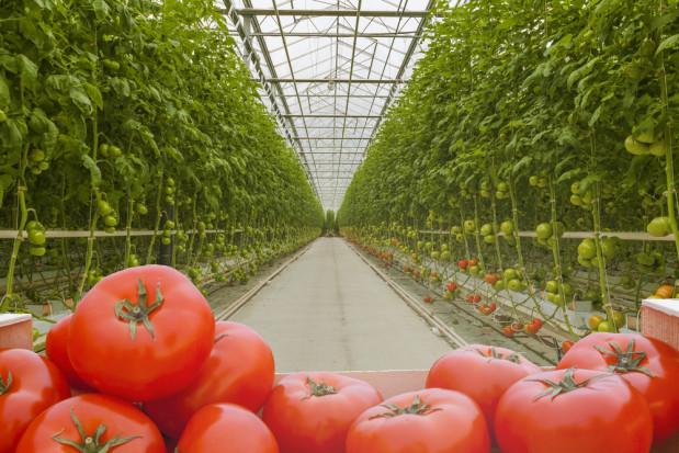 Rosyjska sieć handlowa Magnit inwestuje w kolejne 60 hektarów szklarni