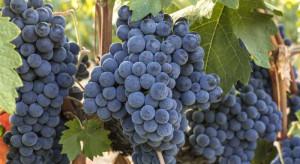 Polska wkrótce może stać się jednym z głównych winiarskich krajów Europy