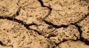 Ministerstwo rolnictwa: straty suszowe wzrosły do ponad 2 mld zł