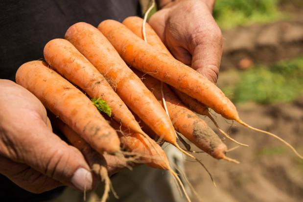 BASF finalizuje transakcję zakupu działu nasion warzyw od firmy Bayer