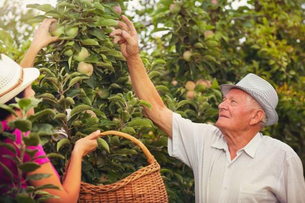 Dania: Prawie co trzeci rolnik jest już na emeryturze i pracuje