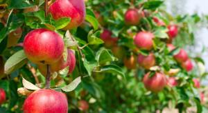 Rosyjski Rosselkoznadzor kontroluje producentów jabłek i pomidorów z Białorusi