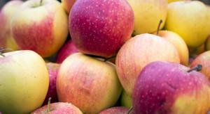 Ceny letnich jabłek na rynkach hurtowych już od 0,67 zł/kg