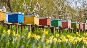 Pszczelarze z całego świata zaapelowali o ochronę pszczół