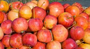 ZSRP i Unia Warzywno-Ziemniaczana apelują o przerwanie dostaw jabłek do przetwórstwa