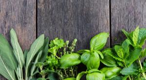 Baziółka: Od 20 lat edukujemy Polaków, żeby jeść zioła. Produkujemy je przez 365 dni w roku
