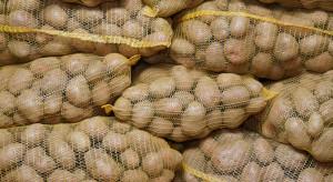 Wielka Brytania podpisuje umowę na eksport ziemniaków do Chin