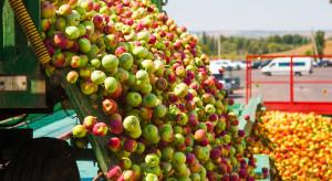 Sadownicy powinni ograniczyć dostawy do zakładów, a zakłady - sprzedaż tanich soków