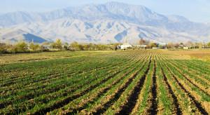 Bank Światowy: 500 mln USD na rozwój produkcji owoców i warzyw w Uzbekistanie