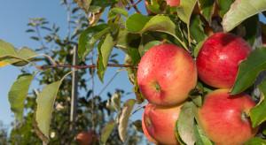 Innvigo rozszerza ofertę dla producentów jabłek