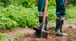 Socjolog: Rolnictwo wymaga specjalizacji, która zamienia chłopów w farmerów