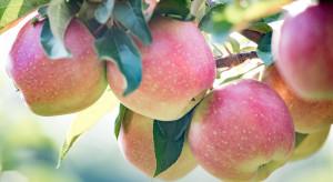 Mołdawia: Niskie ceny jabłek odmiany Gala