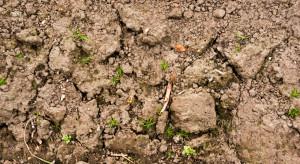 Na terenie Polski utrzymuje się susza rolnicza, plony będą niższe
