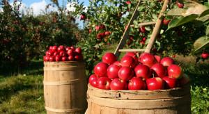 Polscy sadownicy będą rezygnować z produkcji jabłek?