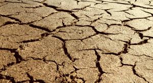 Wielkopolskie: blisko 54 tys. gospodarstw dotkniętych suszą