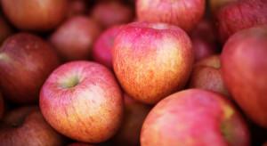 Włoski eksporter: Plon jabłek w Europie nie będzie tak duży, jak się szacuje
