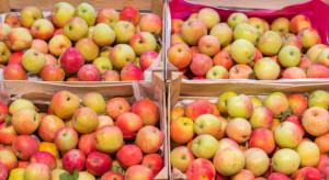 We wrześniu znacząco spadł eksport mołdawskich jabłek do Rosji