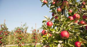 Ogrodnictwo zniknie z listy dyscyplin naukowych?