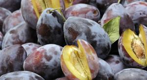 Mołdawia: Cena śliwek do przetwórstwa spadła 7-krotnie rdr