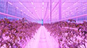 Technologie LED coraz bardziej popularne wśród branży ogrodnictwa szklarniowego w Polsce