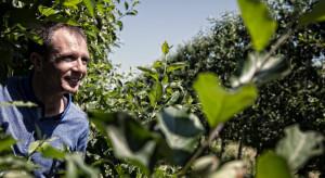 GPO Galster: Warto skorzystać z dotacji na założenie nowoczesnego sadu