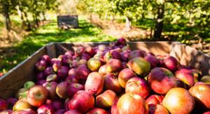 Dokarmianie drzew po zbiorze owoców – azot, cynk i bor