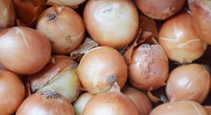 Zbiory cebuli będą o połowę niższe niż przed rokiem