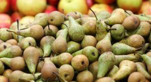 Rynek hurtowy Bronisze: wśród gruszek dominuje odmiana Konferencja
