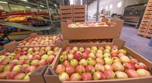 Eksport polskich jabłek w I półroczu spadł o 40%, wzrosła wartość eksportu soku jabłkowego