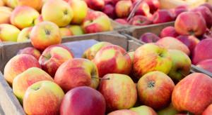 BGŻ BNP Paribas: 2,17 mln ton jabłek deserowych do zagospodarowania w tym sezonie