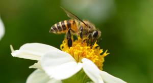 Austria: Rok więzienia dla sadownika za wytrucie pszczół