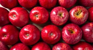 Trwa kampania promocyjna polskich jabłek w Egipcie