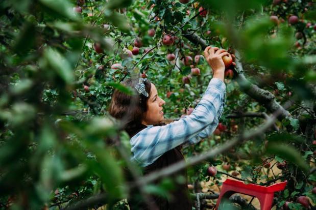 Francuscy rolnicy odczuwają rosnące koszty pracy sezonowej
