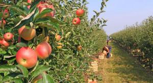 Świętokrzyskie: Straż Graniczna zatrzymała cudzoziemców nielegalnie pracujących w sadzie