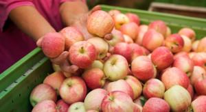 KUPS: Tanie jabłka i soki ze Wschodu mogą wyprzeć z rynku nasze rodzime