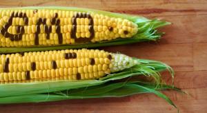 Dyrektor ds. rolnictwa w Bayer Crop Science: Chcemy rozmawiać z Europą o GMO (wideo)