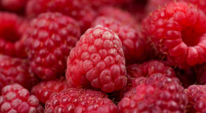 UOKiK informuje o sprawie zmowy cenowej na rynku owoców miękkich