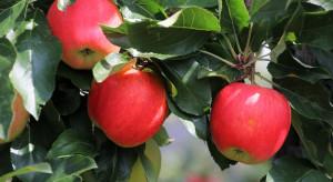 Polskie Centrum Akredytacji: Jabłka z Polski są wolne od zanieczyszczeń (wideo)
