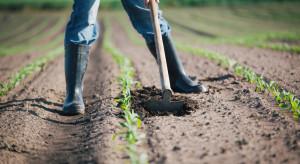 Ukraina stale zwiększa areał upraw organicznych