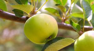Badacze: Wcześniejsza wiosna powoduje gorszy wzrost roślin latem