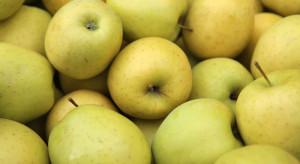 Ukraina: Rekordowo niskie ceny jabłek odmiany Golden Delicious