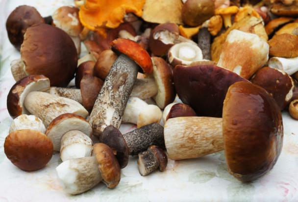 Wysokie ceny grzybów w skupach. W lasach ich brakuje