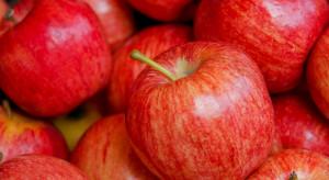 Pomorskie / Gdańsk: Ceny jabłek cały czas spadają