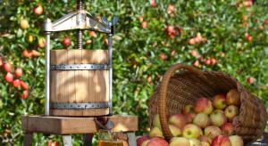 Sok z jabłek z bieszczadzkich sadów bije rekordy cen
