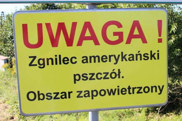 Lublin: kolejne obszary zagrożone wystąpieniem zgnilca amerykańskiego pszczół
